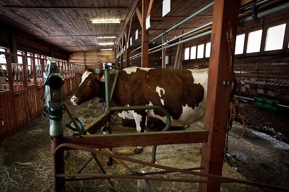 Народное хозяйство: 5 ферм, продукты которых можно купить в Петербурге. Изображение № 96.