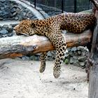 Как живёт и меняется Ленинградский зоопарк . Изображение №24.