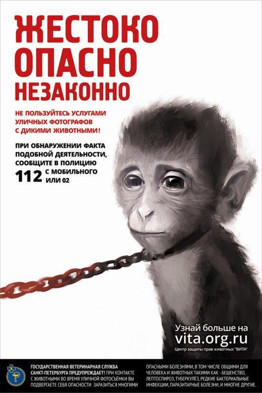 ВПетербурге появилась реклама против фотобизнеса надиких животных. Изображение № 2.