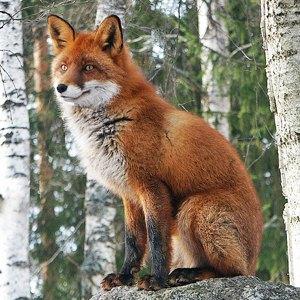 Столичная фауна: Кто живёт в киевских прудах и парках . Изображение № 10.