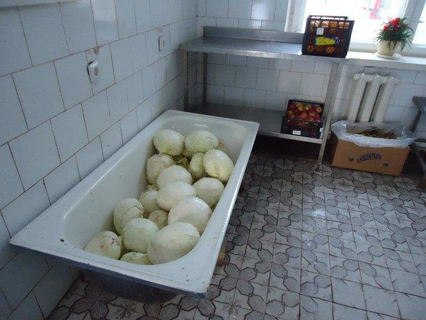В Киевском зоопарке показали, чем кормят животных. Зображення № 1.