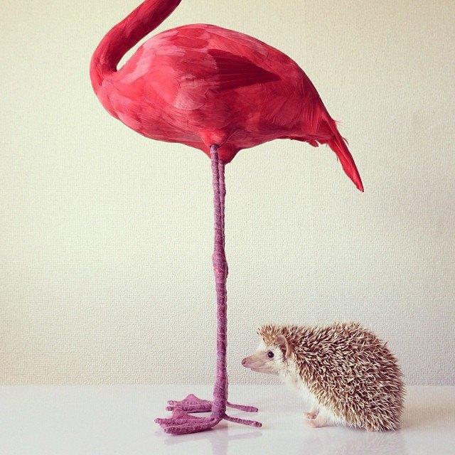 Лучшие страницы Instagram с животными: Часть 1. Изображение № 7.