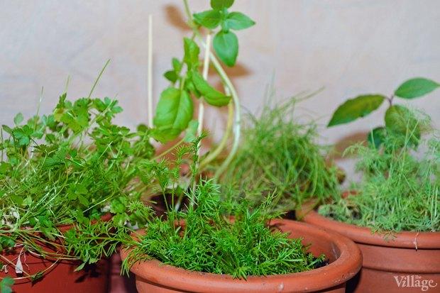 Сделай сад: Что киевляне выращивают у себя на балконах. Зображення № 22.