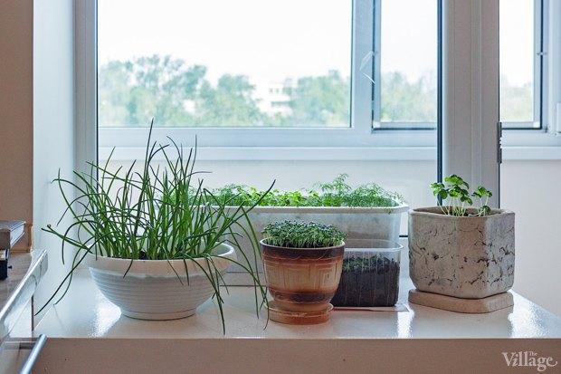 Сделай сад: Что киевляне выращивают у себя на балконах. Зображення № 40.