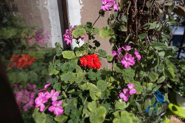 Где посадки: Что горожане выращивают на балконах иподоконниках. Изображение № 45.