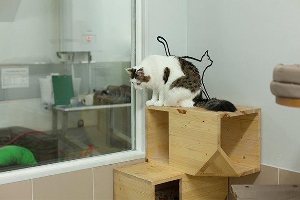Кошкин дом: Как подготовить квартиру к появлению домашнего питомца. Изображение № 7.