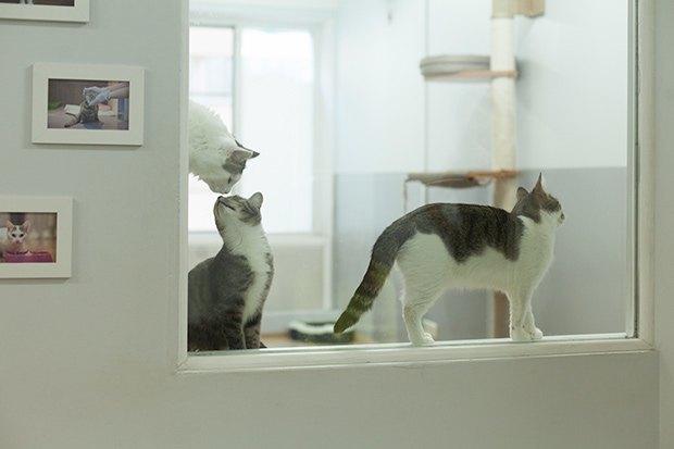 Кошкин дом: Как подготовить квартиру к появлению домашнего питомца. Изображение № 12.