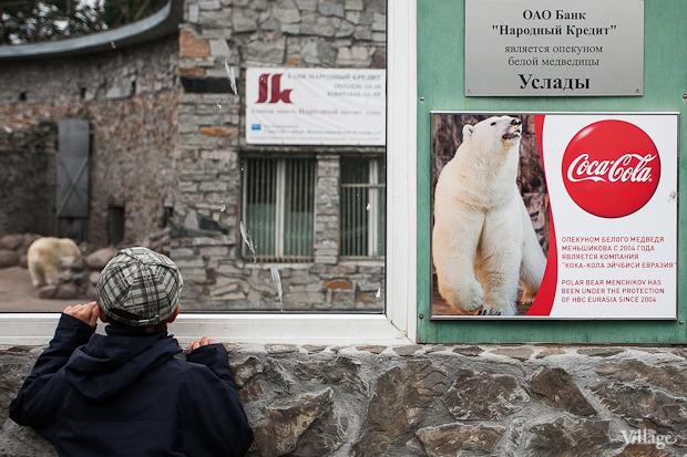 Как живёт и меняется Ленинградский зоопарк . Изображение № 48.