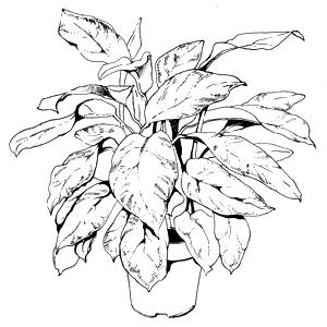 Гид The Village: Комнатные растения. Изображение № 33.
