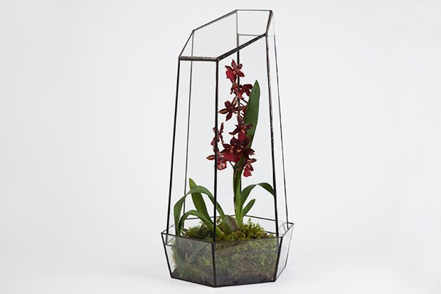Террариумы скомнатными растениями Blossom Universe. Изображение № 2.