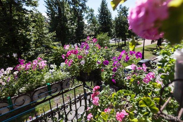 Где посадки: Что горожане выращивают на балконах иподоконниках. Изображение №33.