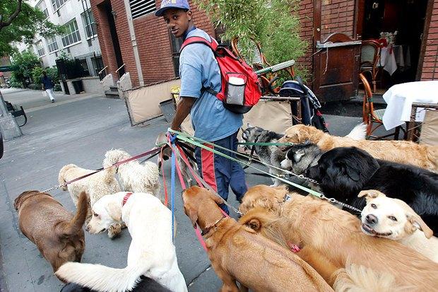 Иностранный опыт: Как устроены площадки для выгула собак в 5 городах мира. Изображение № 2.