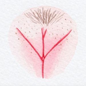На кого подписаться: Инстаграм The Vulva Gallery о красоте женских гениталий — Жизнь на Wonderzine