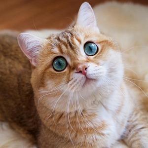 На кого подписаться: Очень круглый кот Хосико — Красота на Wonderzine