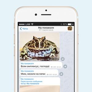 На кого подписаться: Телеграм гигантской лягушки «Мы поквакали» — Жизнь на Wonderzine