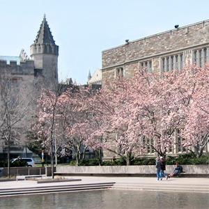 Как я уехала в Принстон изучать средневековый Ближний Восток — Личный опыт на Wonderzine