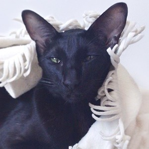 На кого подписаться: Инстаграм нашего редакционного кота Старки — Жизнь на Wonderzine