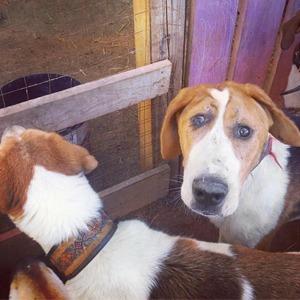 На кого подписаться:  Рехаб для собак  с инвалидностью