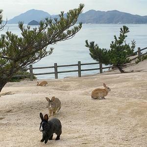 От деревни лис до пляжа свиней: Места, которые захватили животные — Путешествия на Wonderzine