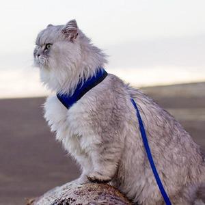 На кого подписаться  в Instagram: Кот-путешественник Гэндальф — Жизнь на Wonderzine