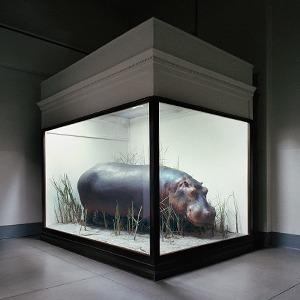 «Museology»:  Тайная жизнь  музейных экспонатов — Фотопроект на Wonderzine