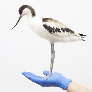 «Birds Don't Cry»: Сова, чайка и другие постояльцы приюта для птиц — Фотопроект на Wonderzine