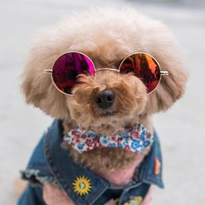 На кого подписаться: «Humans of New York» — только с собаками — Жизнь на Wonderzine
