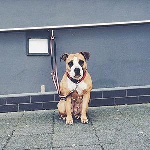 На кого подписаться: Инстаграм о собаках, ждущих своих хозяев — Жизнь на Wonderzine