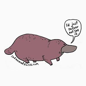 На кого подписаться  в Instagram: Грустные факты  из жизни зверей — Развлечения на Wonderzine