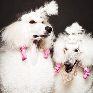 «Стриженые»: Собаки как арт-объект — Фотопроект на Wonderzine