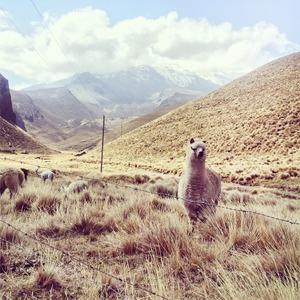 Как я путешествовала по Латинской Америке и влюбилась