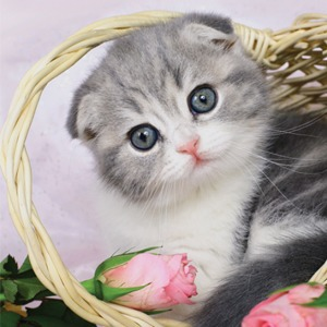Календарь  со здравомыслящими  котятами на 2015 год — Вишлист на Wonderzine