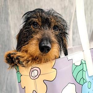 На кого подписаться: Пёс-модник Гектор  — Стиль на Wonderzine