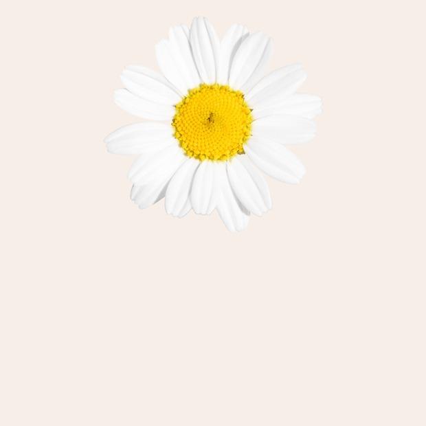 Тополиный пух: Как спастись от сезонной аллергии — Здоровье на Wonderzine