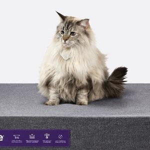 Идеальный матрас для домашних животных Purple — Вишлист на Wonderzine