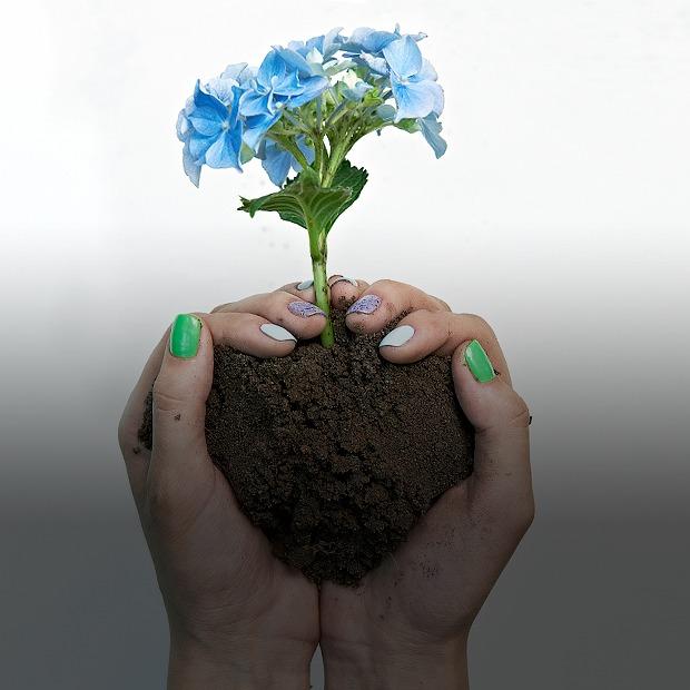 Что будет  с маникюром после  посадки цветов