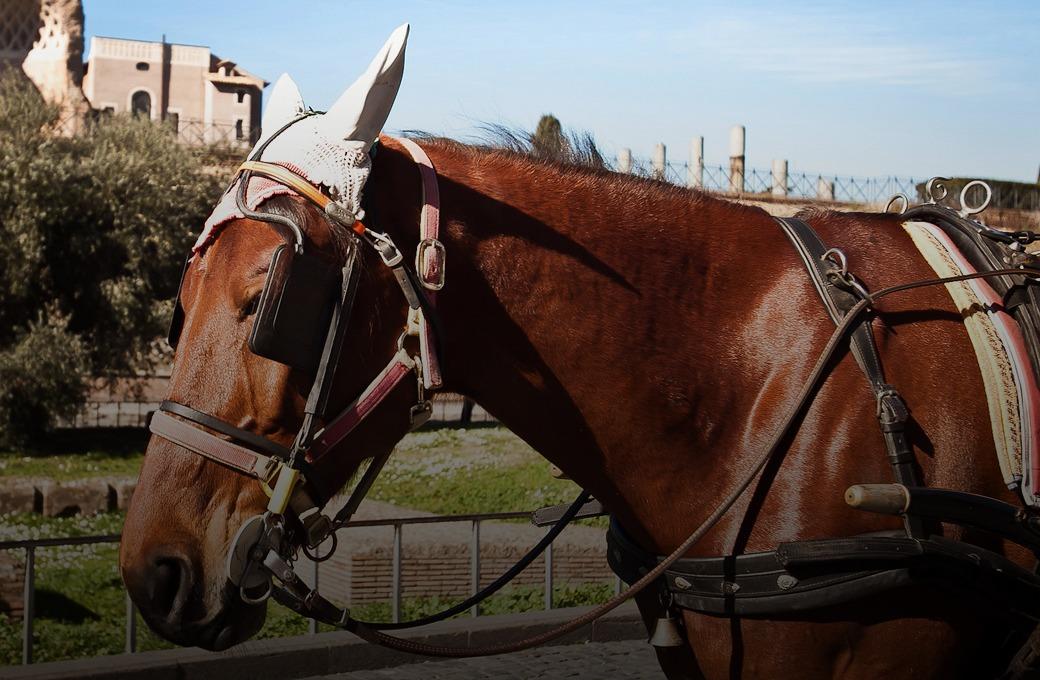 Люди на улицах Рима — Детали на Wonderzine