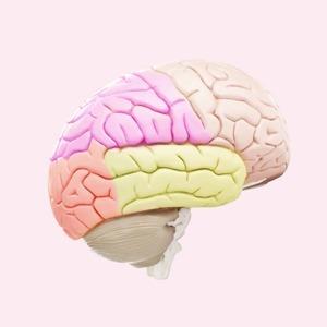 Выживут только нейроны: Как восстановить нервные клетки — Здоровье на Wonderzine