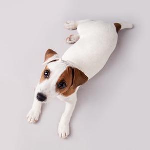 В закладки: Cайт для чувствительных киноманов «Does the Dog Die?» — Кино на Wonderzine
