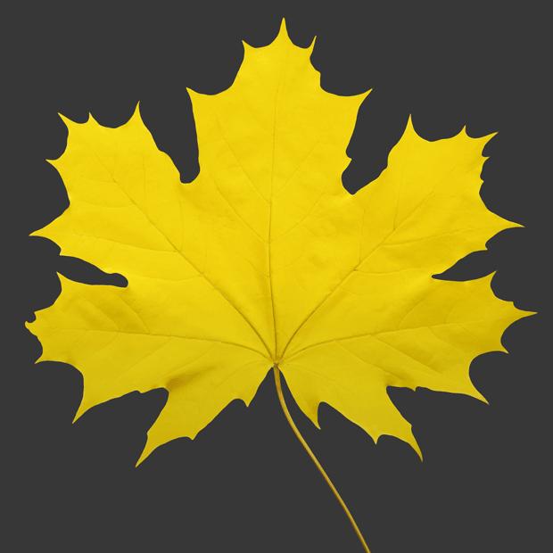 Планы на осень: Новые фильмы, книги, гаджеты, косметика и наряды