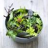 Новое приложение поможет найти парня, учитывая любовь к салату