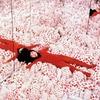Яёи Кусама превратит  в инсталляцию обычную комнату с Airbnb