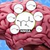 Вышел ролик, объясняющий, как алкоголь действует на мозг