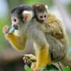 Китайские учёные впервые клонировали обезьян