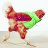 Для кампании магазинов Harvey Nichols сняли безголовых куриц