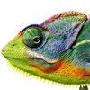 Ученые выяснили, как именно хамелеоны меняют цвет