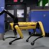 Роботы Boston Dynamics теперь умеют помогать друг другу