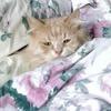 Новые данные: Россияне любят кошек больше всех на свете