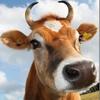 Новая программа позволяет посмотреть на мир глазами коровы