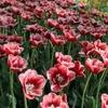 Первый в России сенсорный сад откроется  в «Аптекарском огороде»